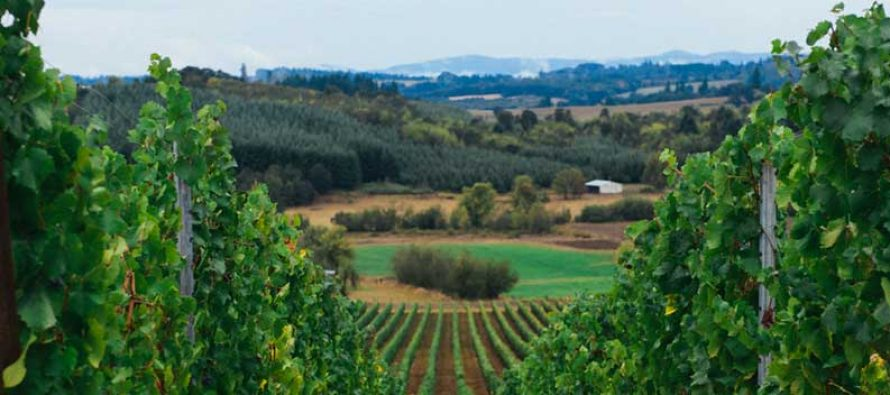 From the Willamette Valley to Omaha: Illahe Vineyards