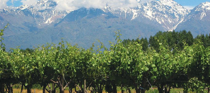 Extraordinary Argentine Wine