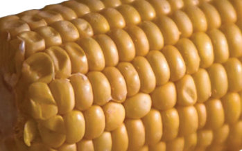 The Great Corn Debate