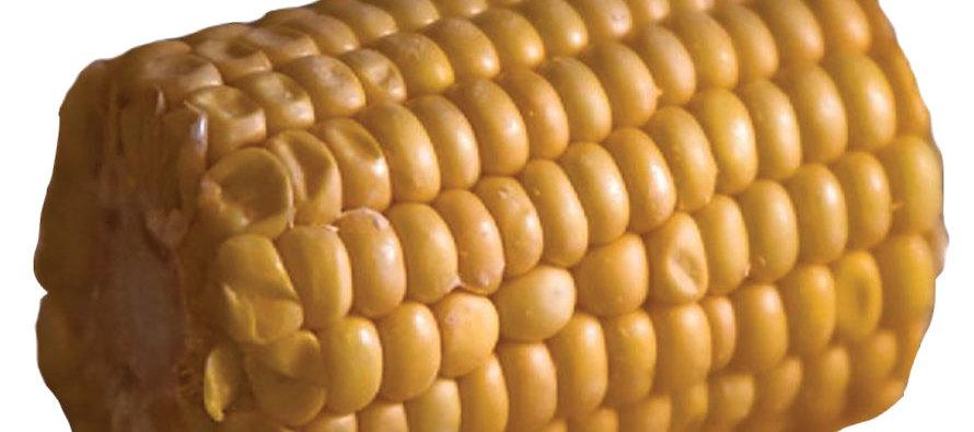 The Great Corn Debate