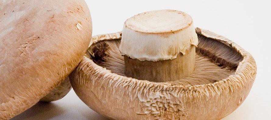 Mushrooms: Nature's Wonder Food
