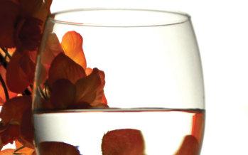 Rieslings Shine in Wine-Food Parings