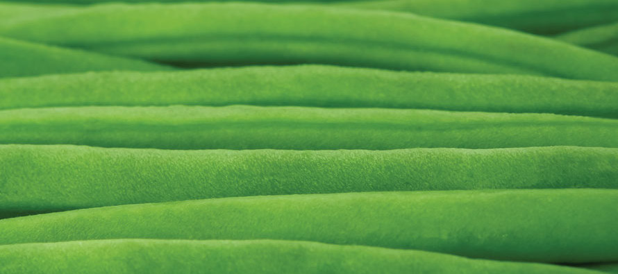 The Comfort of Veggies
